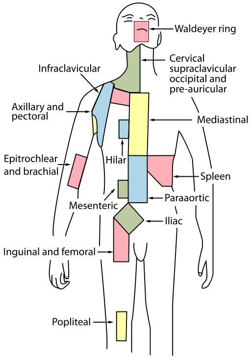 512px-Lymph_node_regions.svg