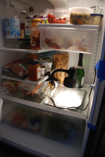 fridge-pic2