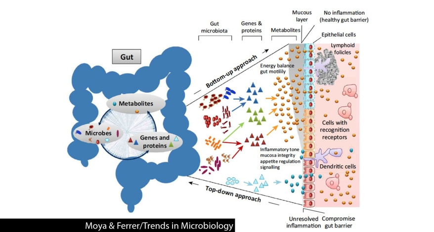 gut_microbiote_is_stable_or_ever_changing1